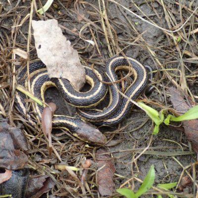Episode 174 - Snake Heads (w/ Kristi DeMeester)