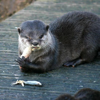 Episode 231 - I Have An Otter Story (w/ Gwendolyn Kiste)